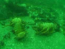 news 2012-11-02-Lobster-molts