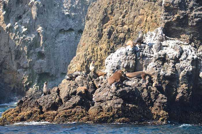 Sea-lions-on-rocks