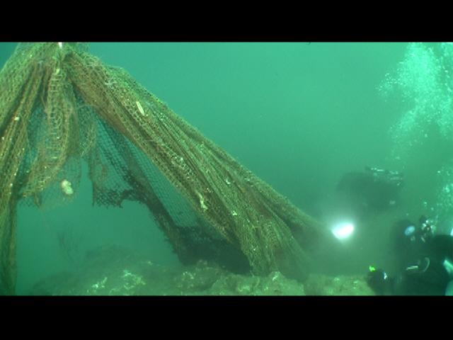ODA Divers have affixed the abandoned squid net to the lift bags in order to float them up so that the removal team can tow it to the boat for removal.