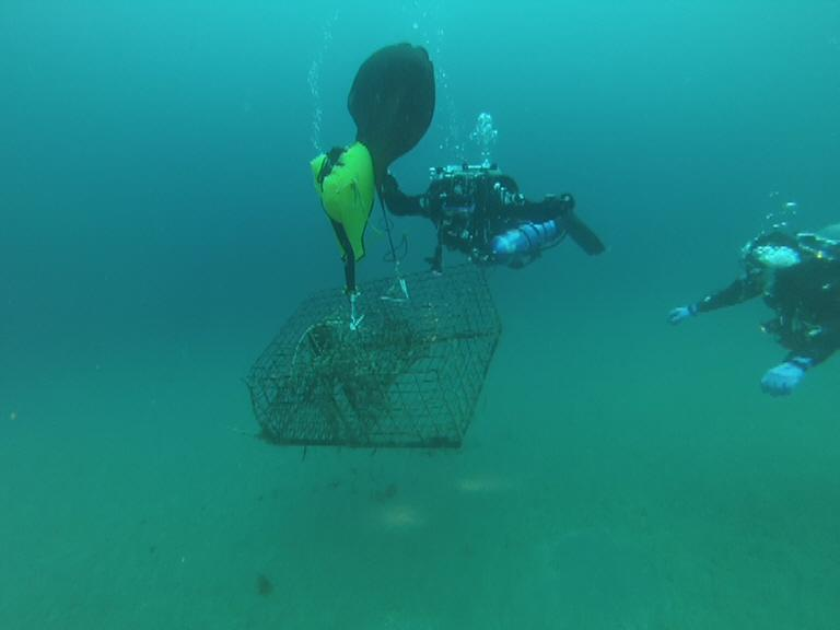 Ocean Defender divers and lobster trap, the float bag begins to life