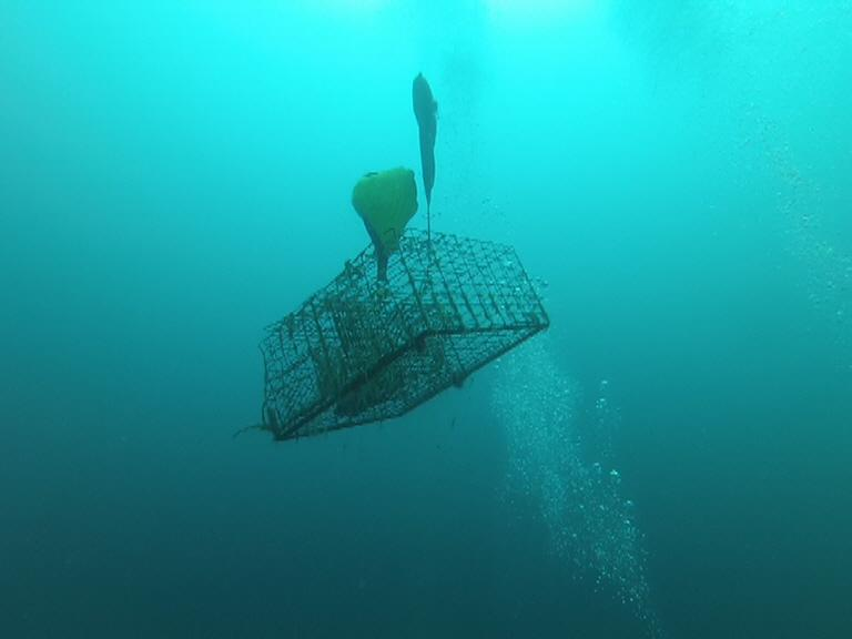 Ocean Defender divers back away and lobster trap rises to surface.
