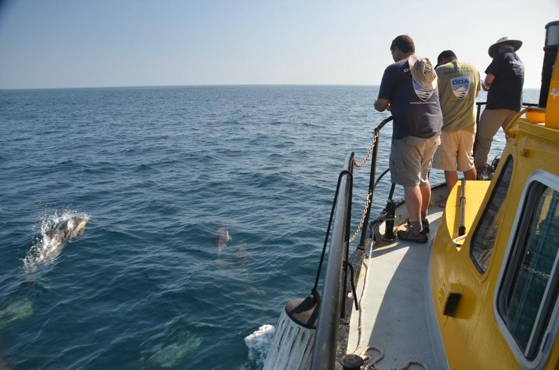 ODA Crew enjoys watching the dolphs bow-riding on our ocean cleanup boat's bow!