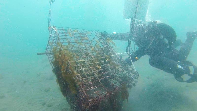 ODA Divers attach a lift bag and float an abandoned lobster trap to the surface for removal
