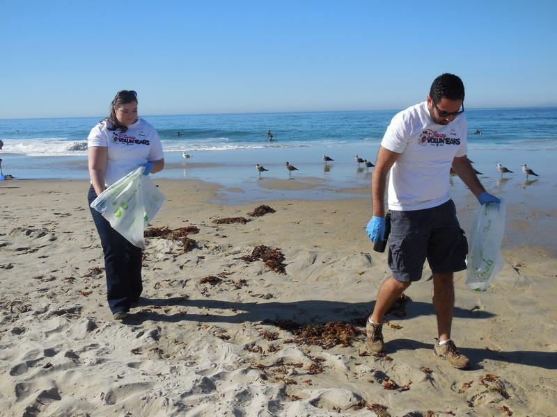 Disney VoluntEARS diligently scour the beach.