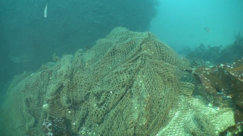 Abandoned fishing net is smothering benthic life, so ODA will remove it.