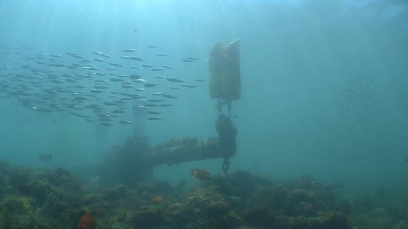Sunken vessel debris surrounded by school of fish