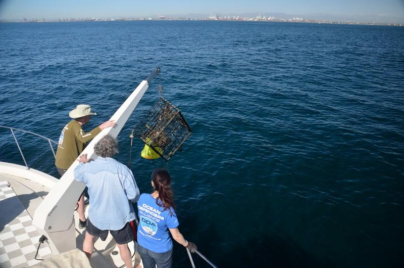 The ocean conservation crew hauling trap with hoist