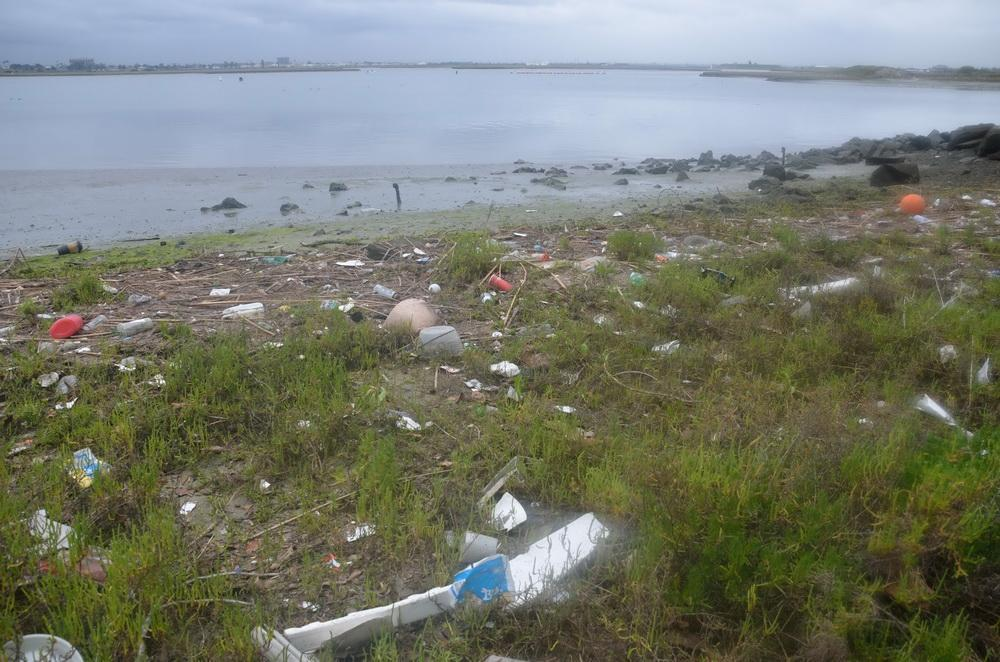 Plastic pollution in Los Alamitos Bay, CA