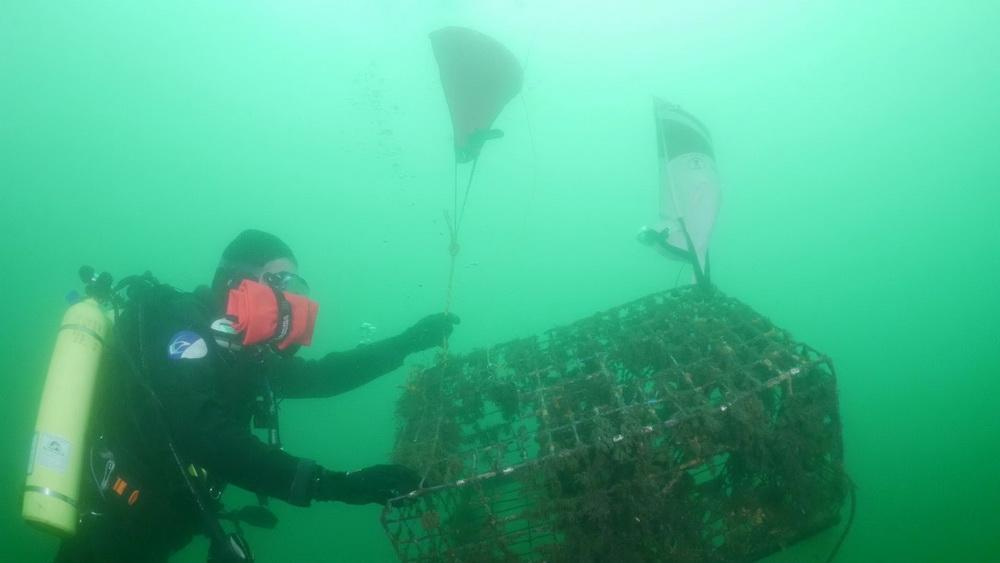 Abandoned lobster trap begins ascent to surface for removal