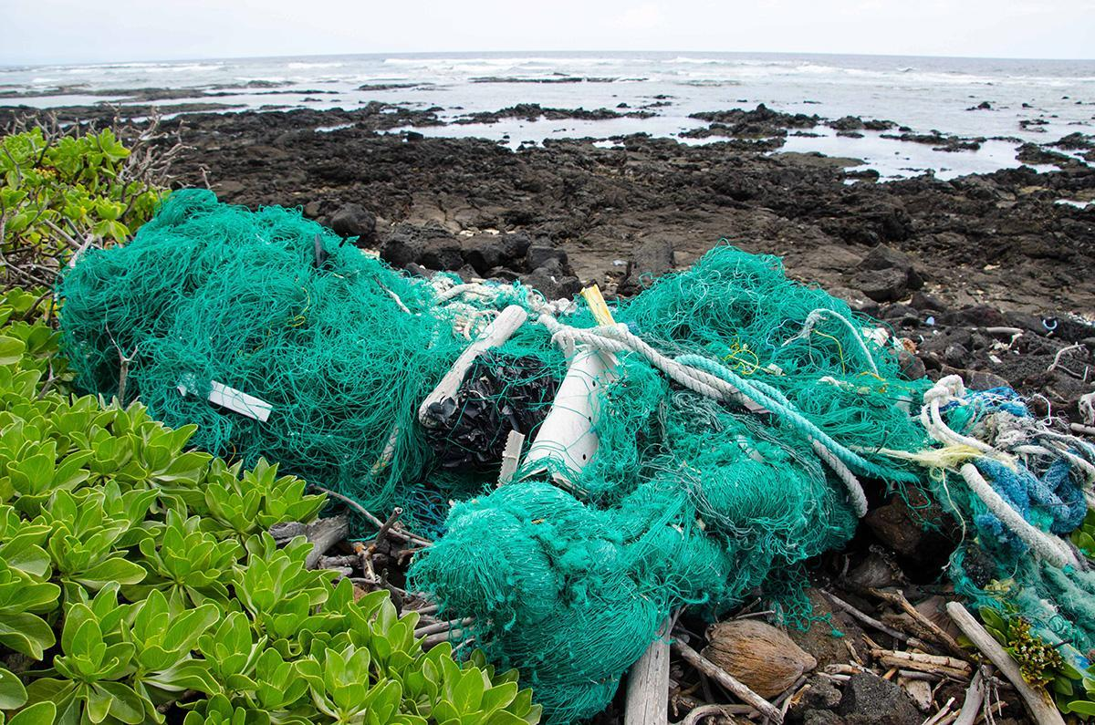 green net at high tide line
