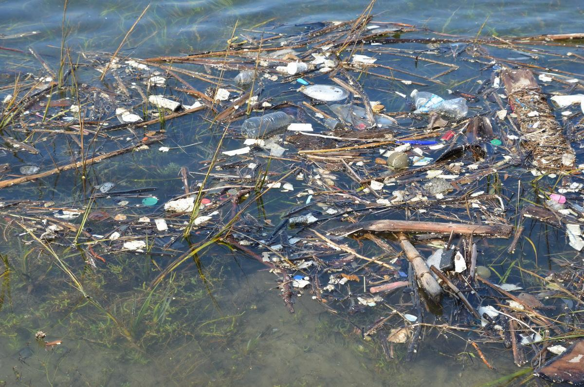 Plastics in eel grass