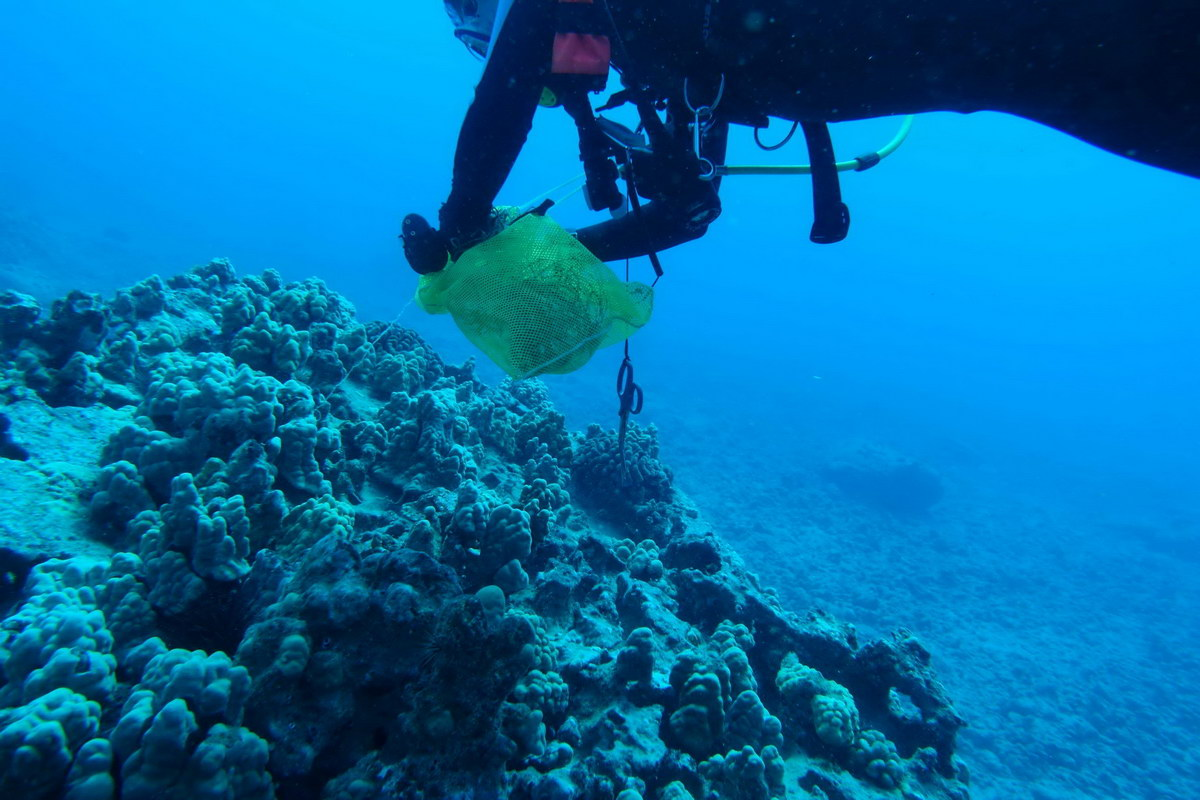 ODA volunteer SCUBA diver collects abandoned fishing line