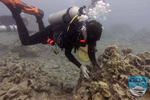 Hawaii-debris-UW-Diver-removing-debris-Ken-1LR